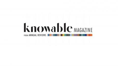 Knowable Magazine From Annual Reviews Logo
